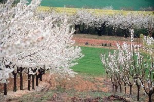 Könyvajánló a vegyszermentes növényvédelem szemléletében