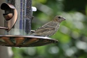 Variációk madáretetőkre - képekkel