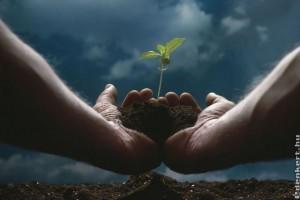 Egy talajjavító (Phylazonit) adja vissza az egészséget?