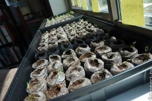 Növények az ablakpárkányon - készüljünk elő a magvetésre