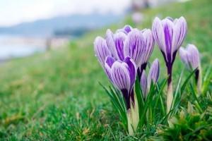 Tavaszi fűbeindítási tippek