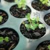 Tesztelhetjük a zöldségmagvak csírázóképességét!