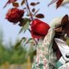 A rózsakertészek legfontosabb kellékei