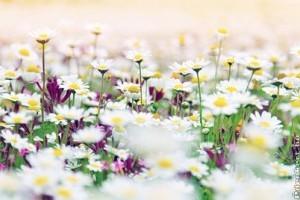 Fehér virágsziget tervezése