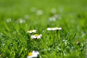 A gyep tavaszi ápolása körül sok a tévhit