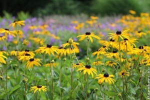 14 könnyen gondozható kerti virág