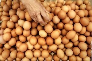 Kilós ár a tojásokra
