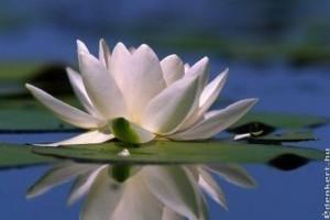 Nemcsak gyógyhatásában, de élővilágában is kuriózum a hévízi tó
