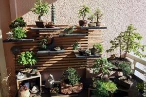 Bonsai öntözése