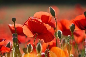 Melyik virág illik a csillagjegyünkhöz?