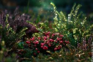 A kezdő kertészek 10 leggyakoribb hibája - 1. rész