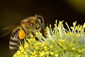 Majdnem 9 ezer éve méhészkedik az ember a régészeti leletek alapján