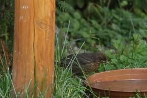 Izgalmas az augusztus a madárbarát kertben