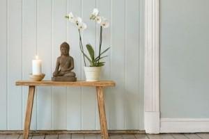 A Feng shui szerint a növények rejtett energiával rendelkeznek