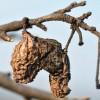 Mi legyen az utolsó őszi növényvédelmi kezelés?