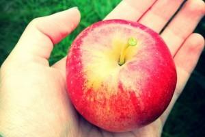 Jól indul az alma ára a piacon