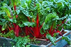 8 zöldség, ami jól fejlődik félárnyékos kertben is