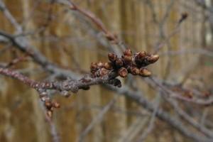 A mínuszok ellenére kiemelkedő lehet a gyümölcstermés