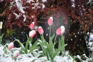 Milyen a te hófedte kerted?