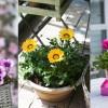 10 napimádó egynyári virágágyba, balkonládába