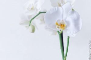 Apró trükkök, hogy az orchidea télen is jól érezze magát