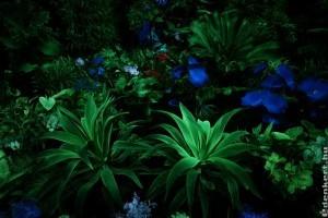 Magyar innováció a sötétben világító növények