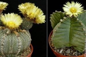 Kaktuszok népesítik be a Füvészkertet
