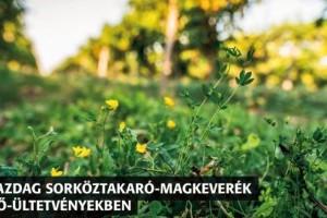 Ökológiai szemléletű szőlőtermesztéshez élő sorköz magkeveréket fejlesztettek