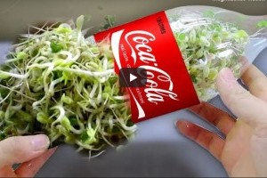 Praktikus újrahasznosítási ötlet: csíráztatás pet palackban