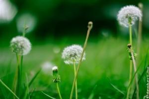 Gyomirtózás: áldás vagy átok?