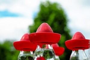 Tudod, milyen növényből készül a tequila?
