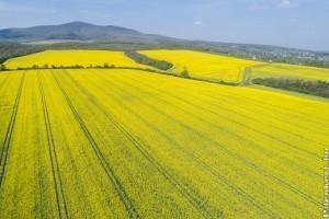 Év végétől új növény-egészésgügyi szabályozás lép életbe az EU-ban