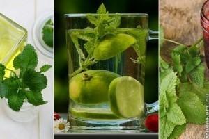 10 tipp, hogy mit kezdj a kertben burjánzó citromfűvel