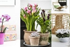 Top 10 virágos szobanövény