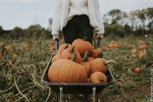 Mi a kölönbség a sütőtök és a halloween tök között?