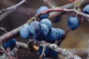 Novemberben gyűjthető (vad)gyümölcsök és gyógynövények