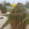 Pampafű fonás - így is teleltetheted díszfüved