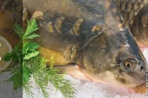 Édesvízi halak: vissza az asztalra!