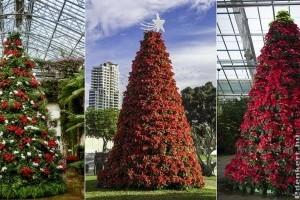 Mikulásvirágból karácsonyfa - láttál már ilyen csodásat?