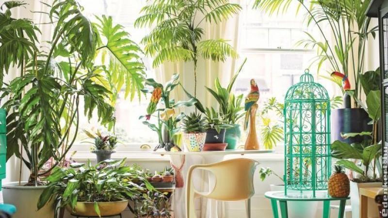 5 szobanövény, amelytől dzsungel hangulatú lesz az otthonod