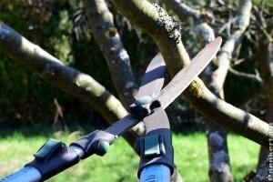 Gyümölcsfa metszése télen: érvek és ellenérvek