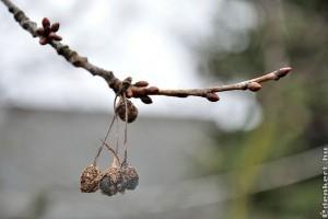 Megérkezett a tavasz! Az első növényvédelmi feladatok a kertben