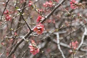 Tavasz van télies idővel - mi legyen a muskátlival, leanderrel?
