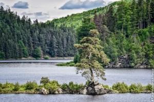 2020 Európa fája: az elárasztott falu őre