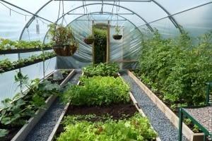 Fóliasátor a kertben: nem csak vidéki idill