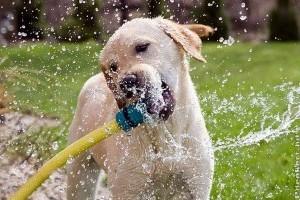 Kerti önitató és játék kutyáknak