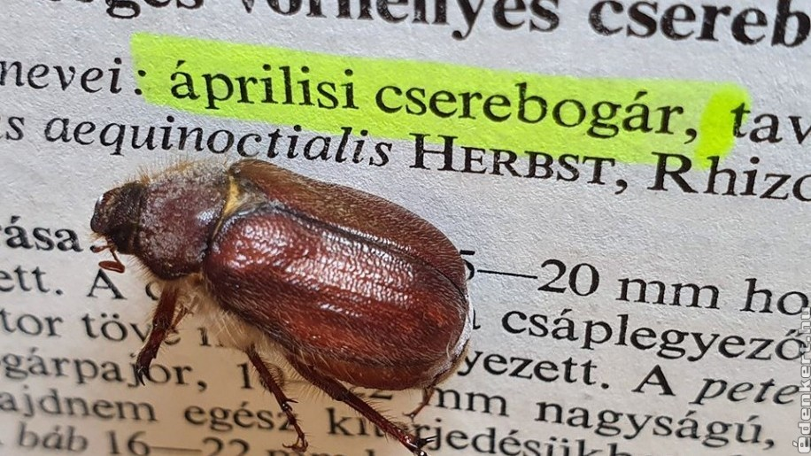 Áprilisban ébredeznek a kártevő rovarok, bogarak