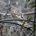 Elijesuztette a madár vendégeim